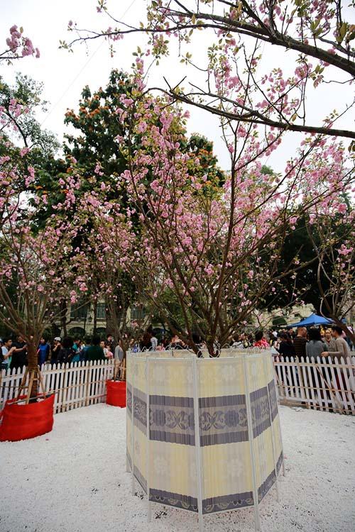 Ngắm hoa anh đào Nhật Bản khoe sắc giữa Thủ đô - 9
