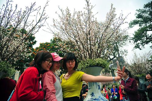 Ngắm hoa anh đào Nhật Bản khoe sắc giữa Thủ đô - 2