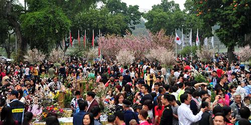 Ngắm hoa anh đào Nhật Bản khoe sắc giữa Thủ đô - 3