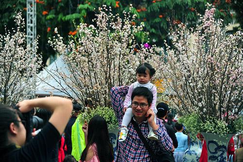 Ngắm hoa anh đào Nhật Bản khoe sắc giữa Thủ đô - 5
