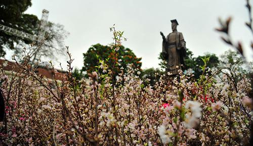 Ngắm hoa anh đào Nhật Bản khoe sắc giữa Thủ đô - 6