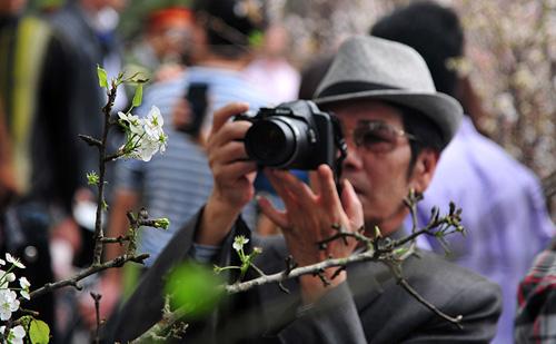 Ngắm hoa anh đào Nhật Bản khoe sắc giữa Thủ đô - 7