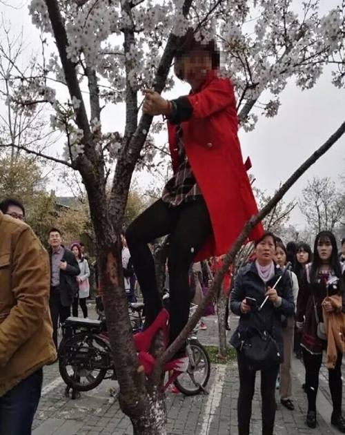 Thiếu nữ TQ mặc váy ngắn leo cây chụp ảnh gây phẫn nộ - 4