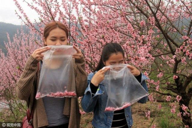 TQ: Bán không khí sạch đựng trong túi nilon - 1