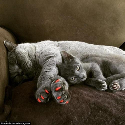 Chó mèo sành điệu hơn nhờ đeo móng chân giả - 2