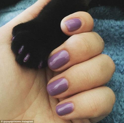 Chó mèo sành điệu hơn nhờ đeo móng chân giả - 3