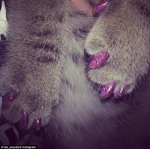 Chó mèo sành điệu hơn nhờ đeo móng chân giả - 6