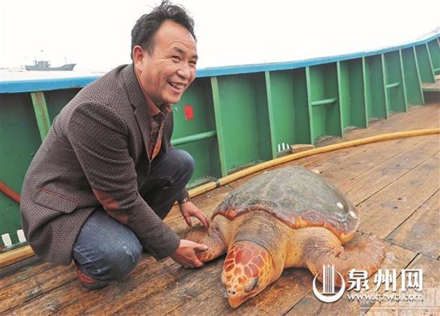 """Từ chối 1500USD, thả """"cụ rùa"""" khổng lồ trăm tuổi về biển - 2"""