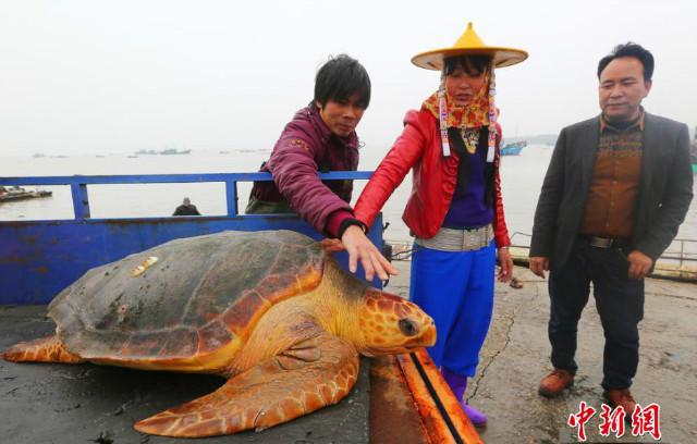 """Từ chối 1500USD, thả """"cụ rùa"""" khổng lồ trăm tuổi về biển - 3"""