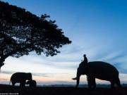 Thế giới - Ảnh: Ngôi làng thuần hóa voi cuối cùng ở Thái Lan
