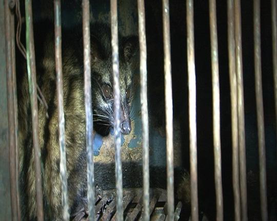Tàng trữ động vật hoang dã cung cấp cho nhà hàng - 2