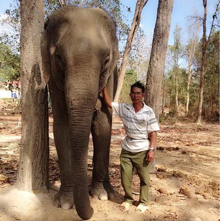 """Ký sự rừng sâu: Những """"chiến binh"""" giải cứu voi rừng - 1"""