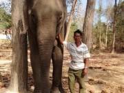 """Tin tức trong ngày - Ký sự rừng sâu: Những """"chiến binh"""" giải cứu voi rừng"""