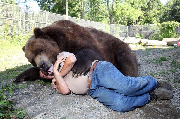 Cặp đôi Mỹ sống hạnh phúc cùng gấu nặng hơn 6 tạ - 3
