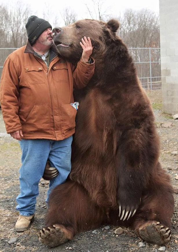Cặp đôi Mỹ sống hạnh phúc cùng gấu nặng hơn 6 tạ - 4