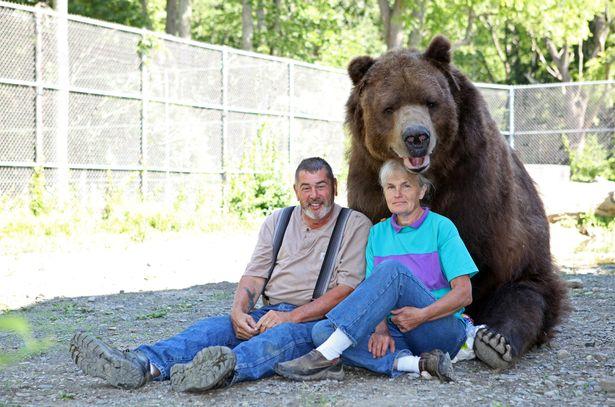 Cặp đôi Mỹ sống hạnh phúc cùng gấu nặng hơn 6 tạ - 2