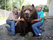 Phi thường - kỳ quặc - Cặp đôi Mỹ sống hạnh phúc cùng gấu nặng hơn 6 tạ