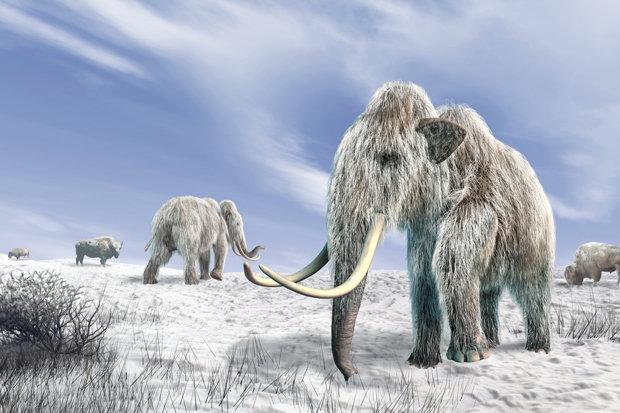 """Phát hiện """"của quý"""" voi ma mút 700.000 năm tuổi ở Anh? - 1"""