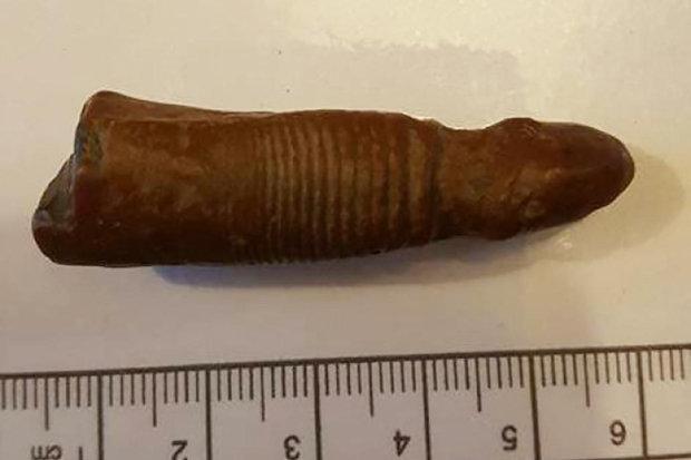 """Phát hiện """"của quý"""" voi ma mút 700.000 năm tuổi ở Anh? - 2"""
