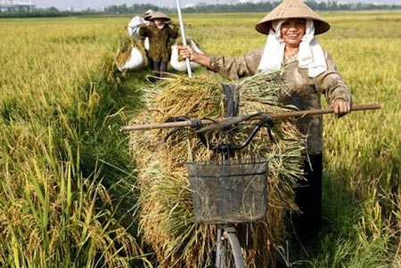 Vượt lên nền nông nghiệp 'cơ bắp' - 2