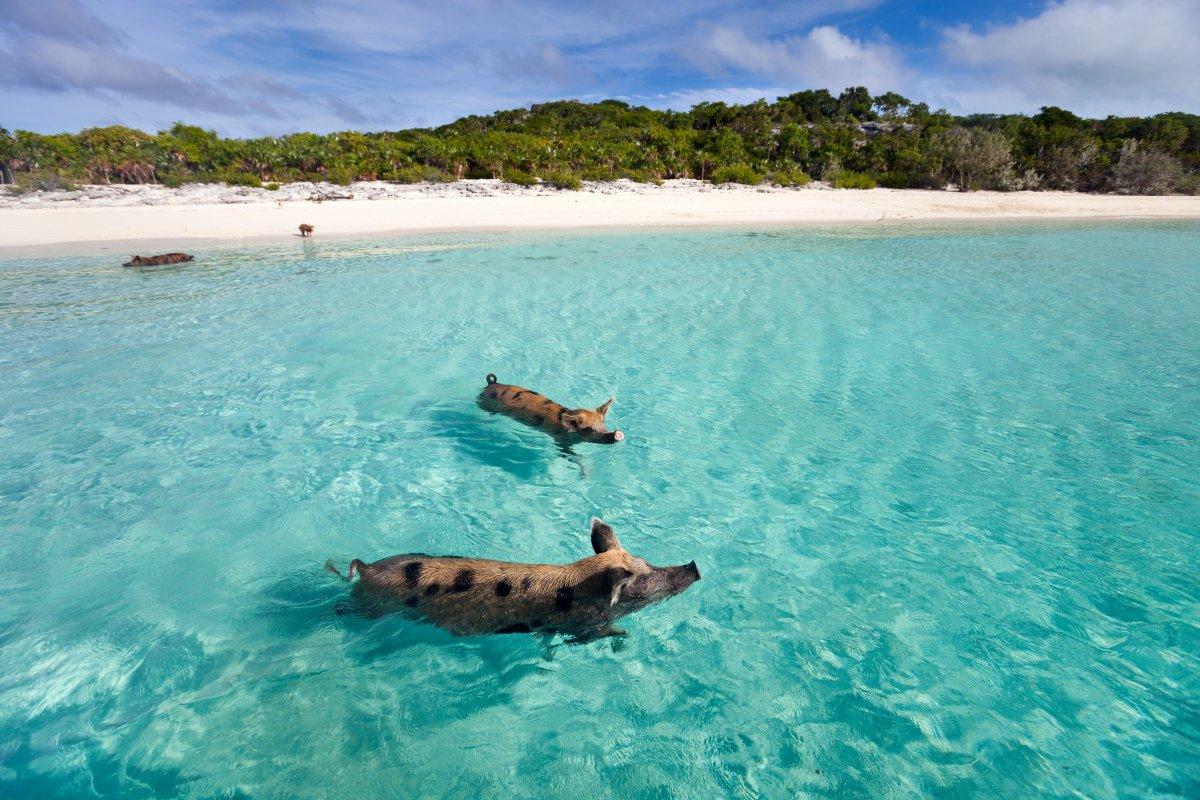 Côn Đảo đứng đầu danh sách những hòn đảo bí ẩn nhất TG - 8