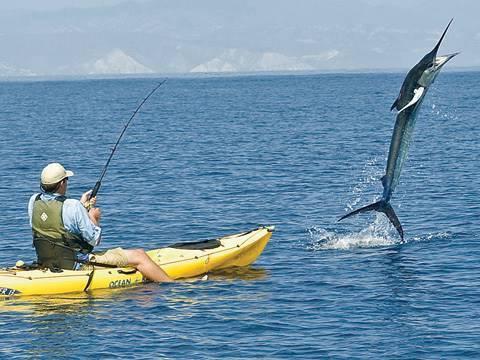 Úc: Ngư dân bị cá lôi khỏi thuyền, kéo đi 55km - 1