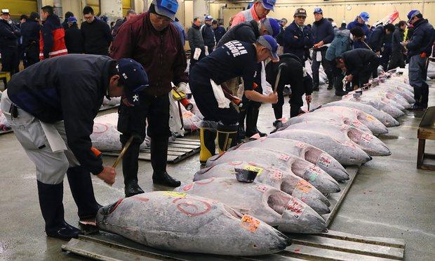 Cá ngừ hơn 2 tạ được bán với giá gần 15 tỷ đồng ở Nhật - 2