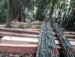 """Choáng váng chứng kiến rừng phòng hộ ở Quảng Bình """"chảy máu"""""""