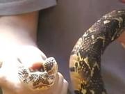 Phi thường - kỳ quặc - Bị rắn độc cắn vẫn dung dung chơi đùa, quay video