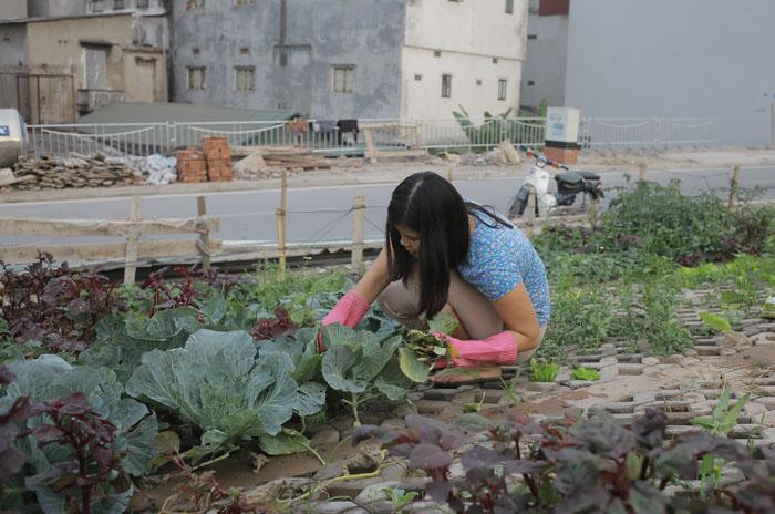 Người Hà Nội leo dốc, trồng rau trên hốc bê tông - 3