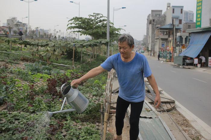 Người Hà Nội leo dốc, trồng rau trên hốc bê tông - 9