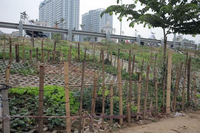 Người Hà Nội leo dốc, trồng rau trên hốc bê tông - 11
