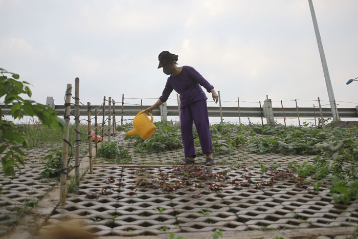 Người Hà Nội leo dốc, trồng rau trên hốc bê tông - 13
