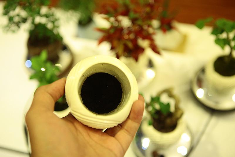 Săn bonsai bay, xoay tròn trên không trung chơi Tết - 4