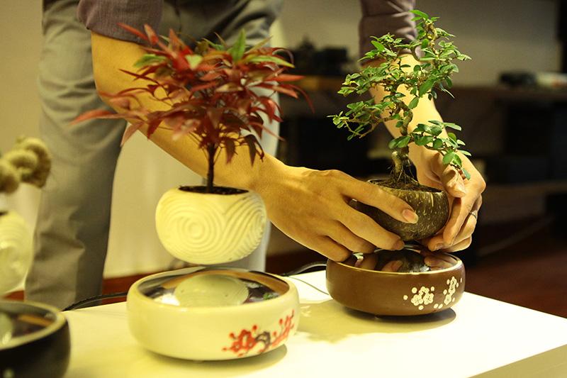 Săn bonsai bay, xoay tròn trên không trung chơi Tết - 3