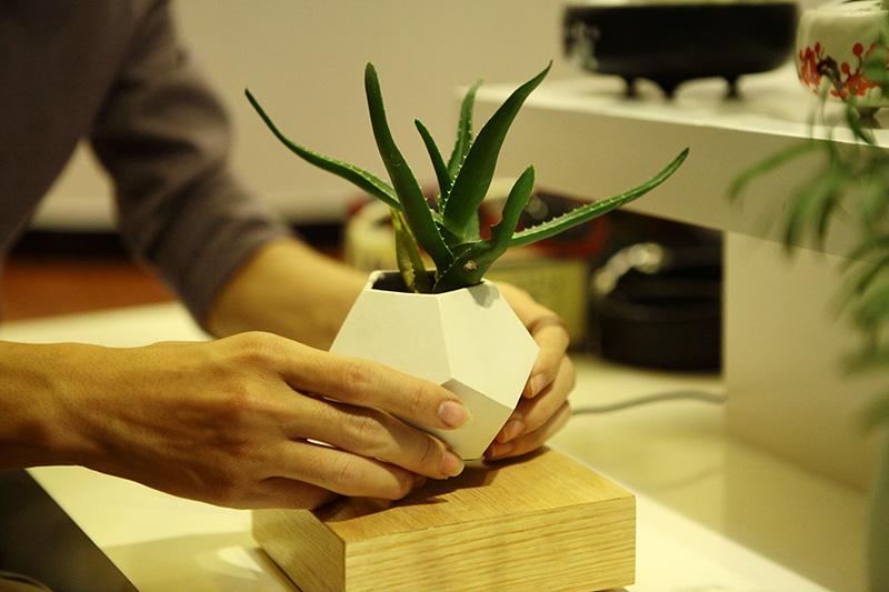 Săn bonsai bay, xoay tròn trên không trung chơi Tết - 5