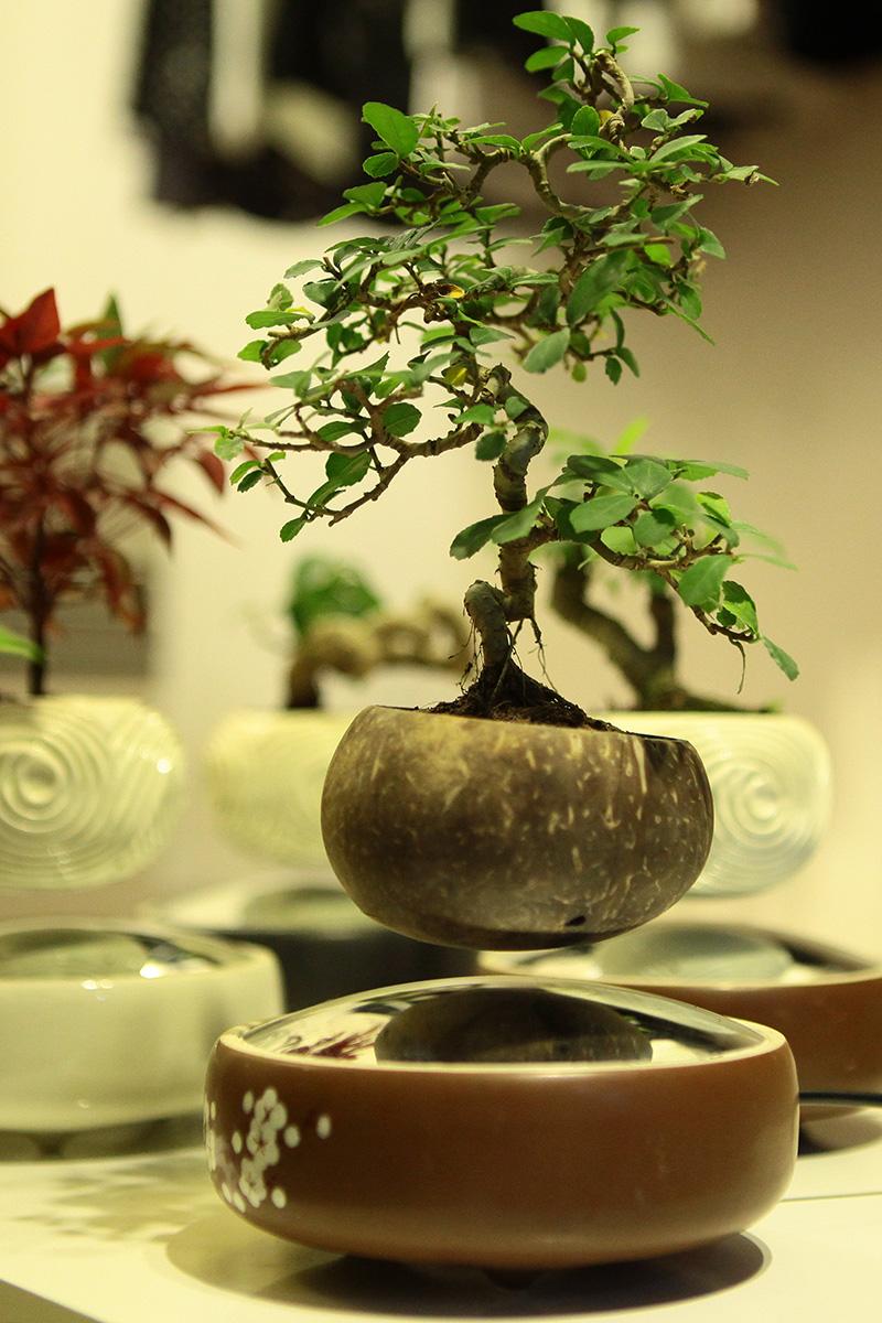 Săn bonsai bay, xoay tròn trên không trung chơi Tết - 7