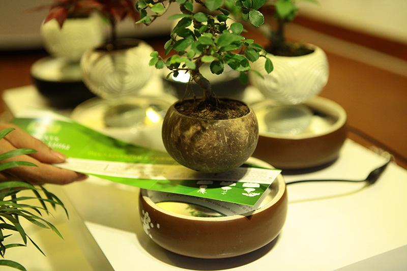 Săn bonsai bay, xoay tròn trên không trung chơi Tết - 6
