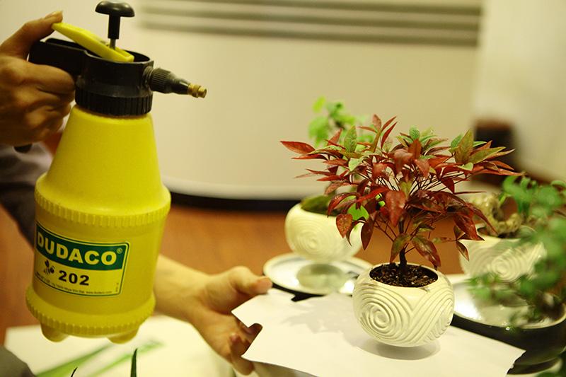 Săn bonsai bay, xoay tròn trên không trung chơi Tết - 10