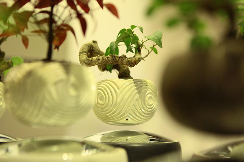 Săn bonsai bay, xoay tròn trên không trung chơi Tết - 9