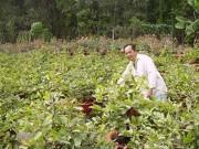 Thị trường - Tiêu dùng - Lặt lá để mai nở đúng Tết