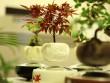 Săn bonsai bay, xoay tròn trên không trung chơi Tết