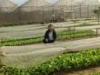 10 năm xây dựng thương hiệu nông sản VN với bữa ăn từ nông trại sạch