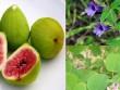 Hỗ trợ tán sỏi mật, sỏi thận, sỏi gan hiệu quả từ các dược liệu tự nhiên