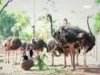 Một ngày chơi cùng chim khổng lồ ở Ba Vì