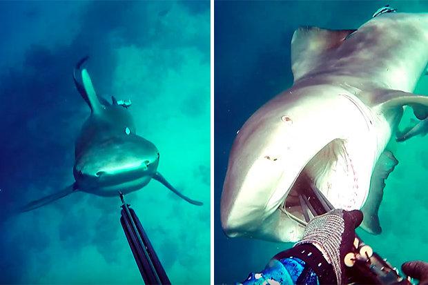 Hãi hùng cảnh cá mập điên cuồng tấn công thợ lặn ở Úc - 3