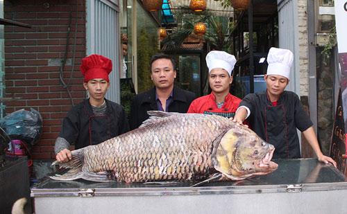 """Chi 140 triệu, """"rước"""" cá hô khủng từ Campuchia về HN - 1"""