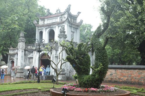 Cận cảnh cặp rồng kết từ cây xanh ở Văn Miếu - Quốc Tử Giám - 3