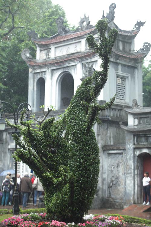 Cận cảnh cặp rồng kết từ cây xanh ở Văn Miếu - Quốc Tử Giám - 4