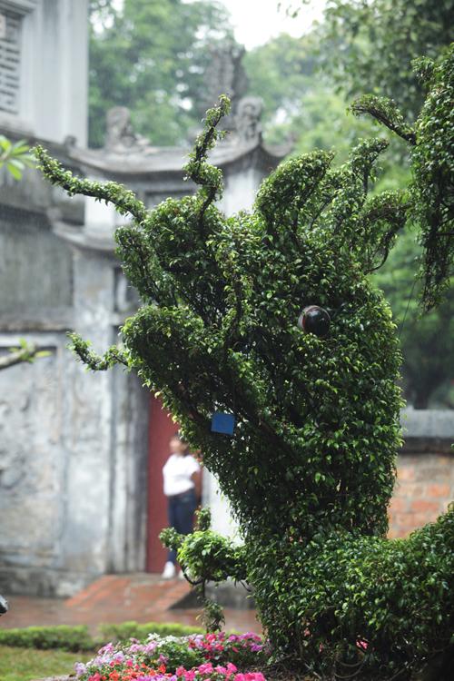 Cận cảnh cặp rồng kết từ cây xanh ở Văn Miếu - Quốc Tử Giám - 7